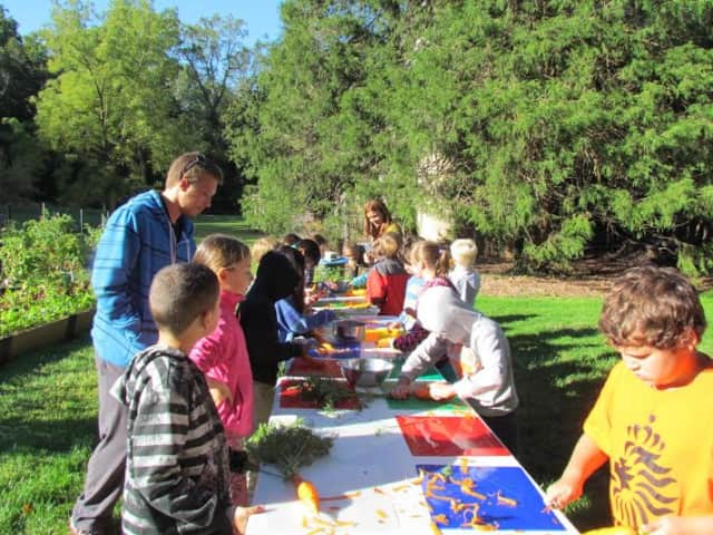 Pocantico Hills School students will pick vegetables to use for their soup harvest day.