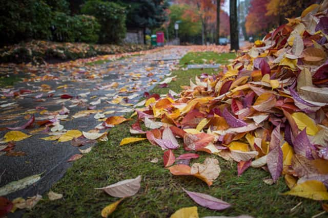 Loose piles of leaves, which clog drains and create slick roadways, will not be picked up in New Rochelle this fall.