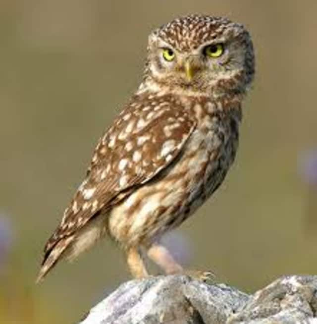 Be on the prowl for owls at Marshlands Conservancy.