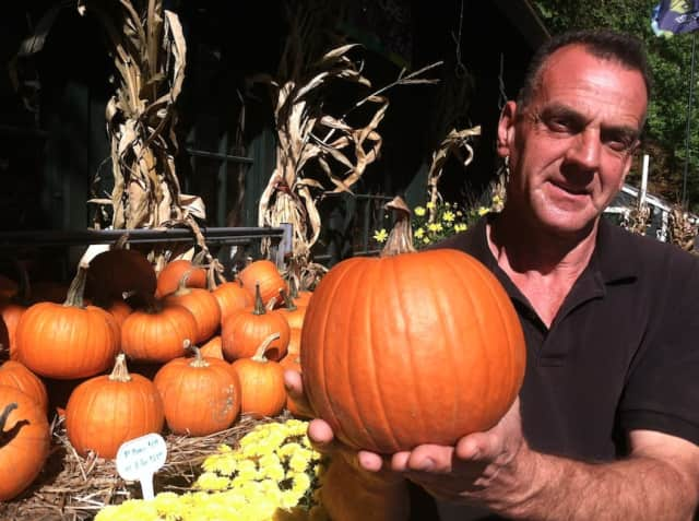 Joseph Basone, manager at Geiger's Home & Garden Center at 259 Frogtown Road in New Canaan, holds up a pumpkin Friday.