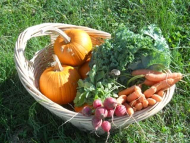 Pick pumpkins and buy fall vegetables at Hilltop Hanover Farm.