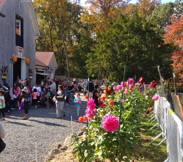 A crowd enjoys Spooktoberfest 2014 at Hart's Brook Park and Preserve in Hartsdale. This year's event will take place Oct. 17.