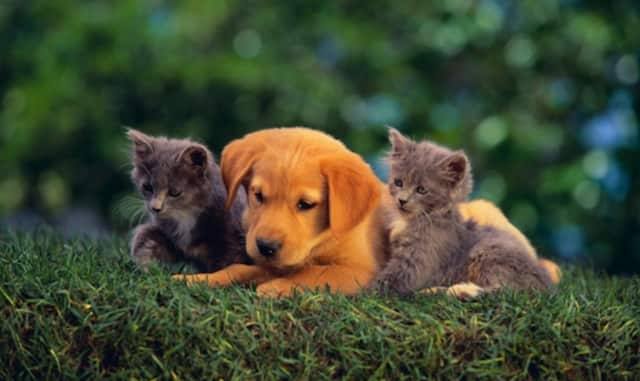The risk in Westchester of pets and Ebola is extremely low.