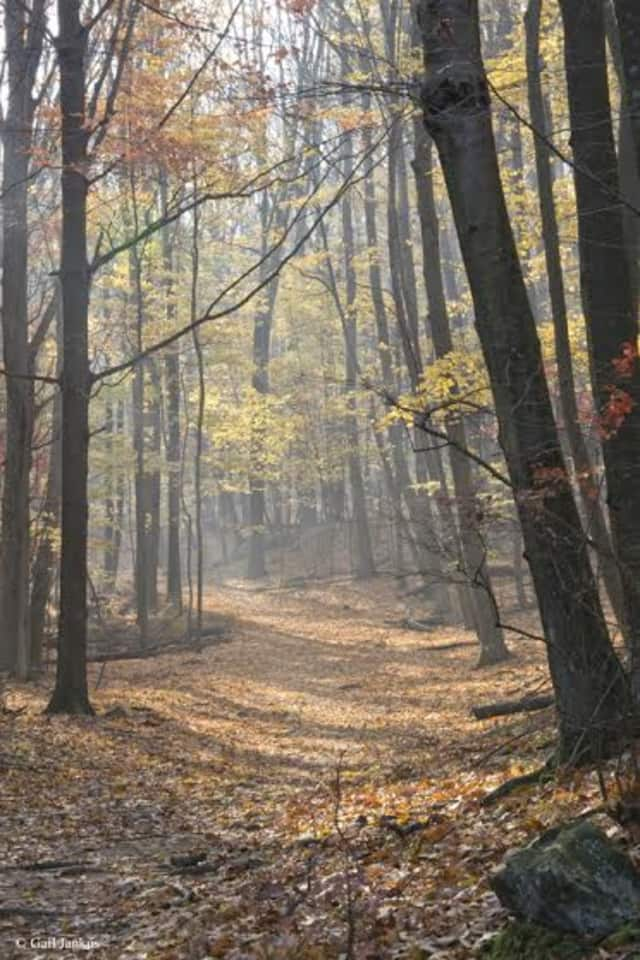 Pound Ridge has a variety of trails made great for hiking.