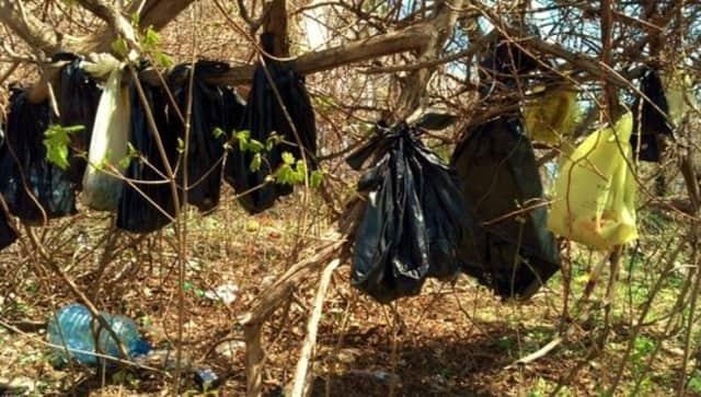 Deceassed felines found hanging in Yonkers in April