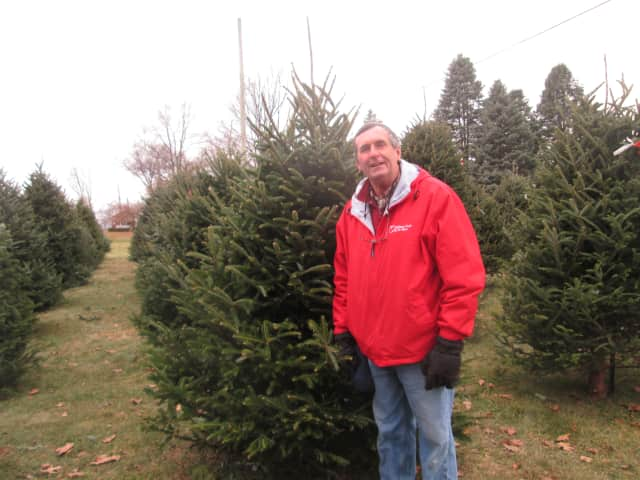 Randy Pratt in front of one of the Christmas trees at Wilkens Farm.