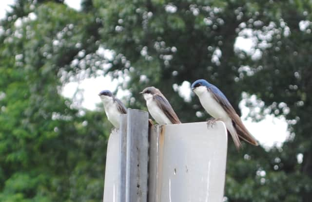 Bird watching at Croton Point Park is among events planned in Westchester.