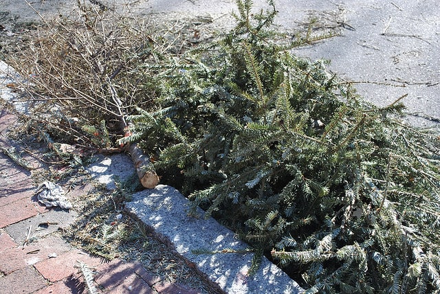Christmas tree collection will begin in New Rochelle in January.