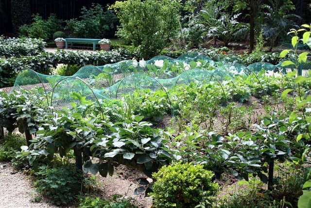 Homegrown Harvest is hosting a four-part gardening series at the New Canaan Library starting Tuesday.