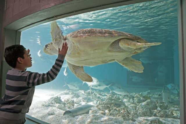 """Maritime Aquarium offers """"Spring Vacation Adventures"""" April 13-17."""