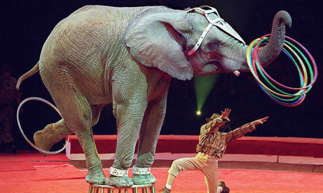 Pace University students were part of the movement to end elephant abuse in circus acts.