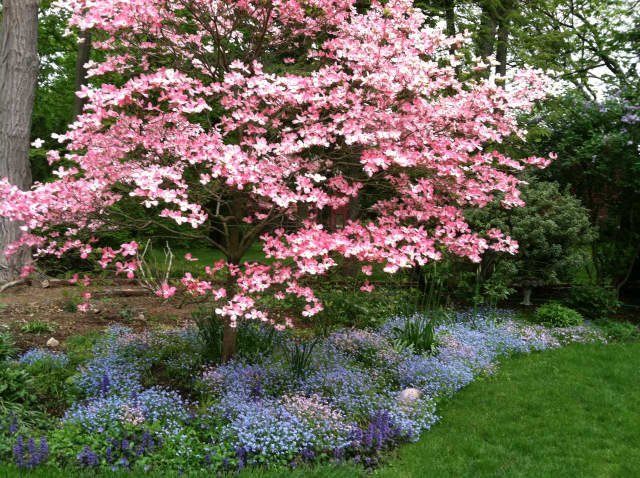 Designed by Darien landscaper Sara McCool, and a sight for sore eyes, is this delightful spring bed in bloom.