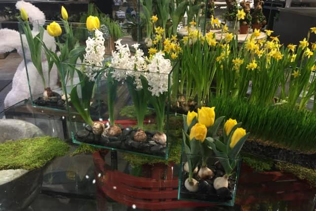 Some of the arrangements that Nielsen's Florist in Darien has begun preparing for Easter.