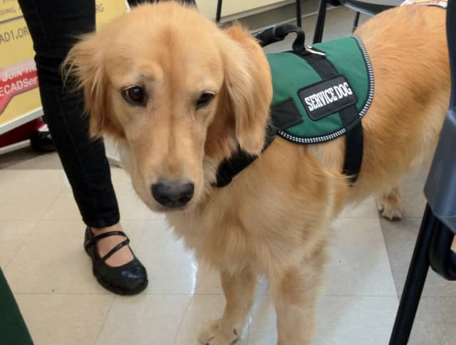 Learn about service and therapy dogs at Englewood Library on Saturday.