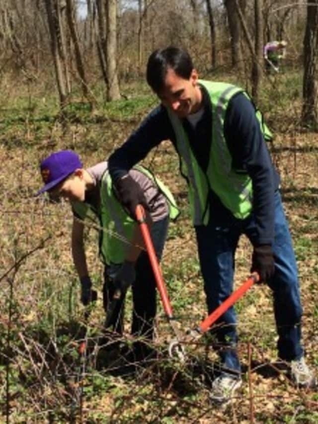 New Rochelle Mayor Noam Bramson with junior leader Cole Feuer trimming invasive weeds at Ward Acres Park.