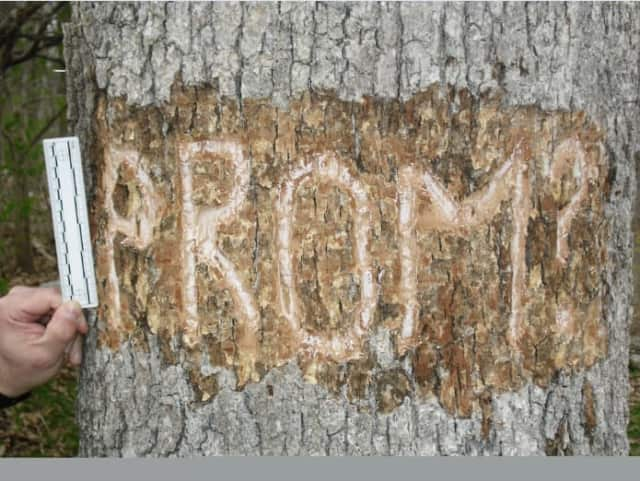 Police are investigating the vandalism of a tree in a state park.