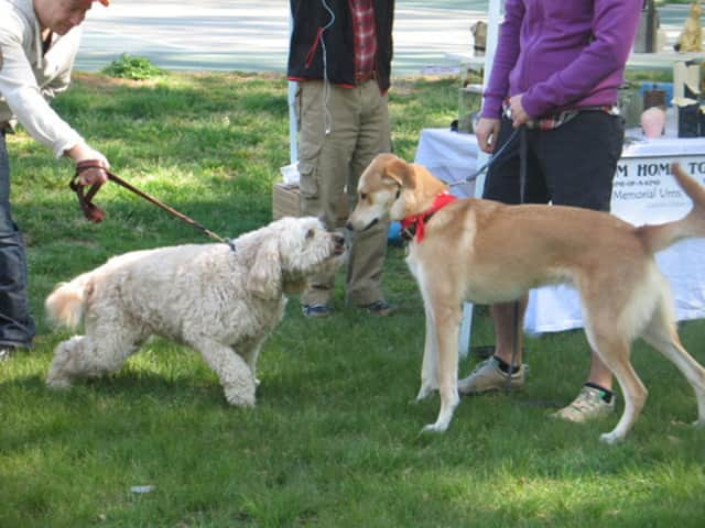 Dogs can reunite at the SPCA of Westchester's Dog Walk and Pet Fair.