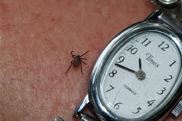 The deer tick can spread babesiosis to humans.