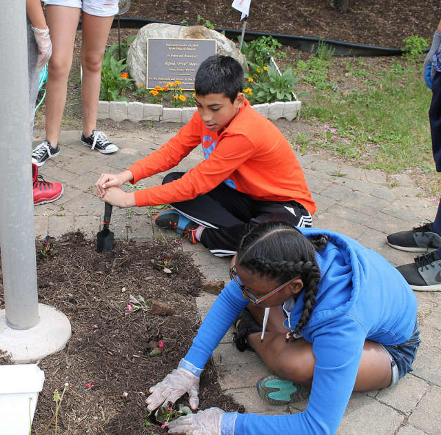 Seventh-graders at Alexander Hamilton Junior High School in Elmsford participated in outdoor community service learning May 22.