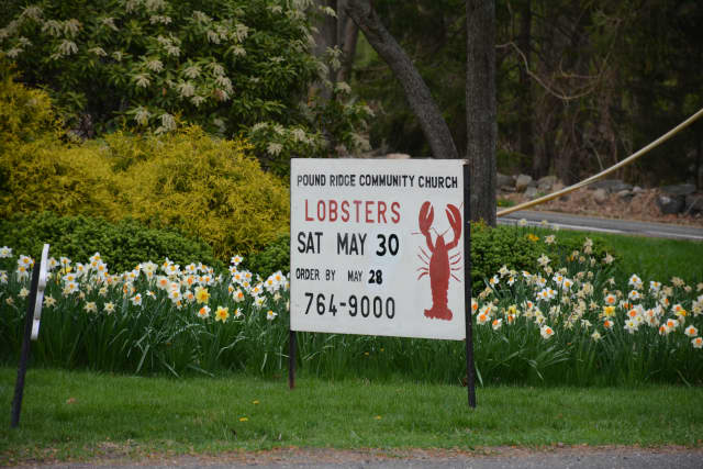 The Pound Ridge Community Church is hosting its 43rd Annual Lobster Festival May 30.