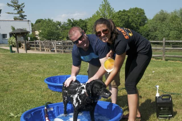 Event organizers bathe Kayla at a previous Doggy Day Palooza at the Stamford Dog Park.