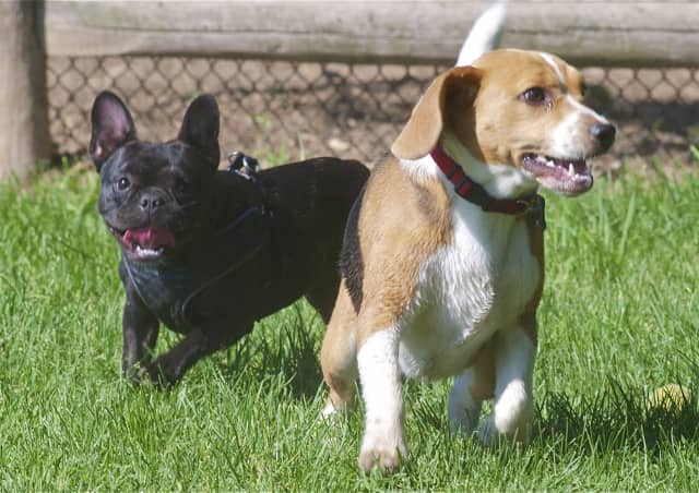 The weather will be perfect to take the pups to the dog park this week in Fairfield County.
