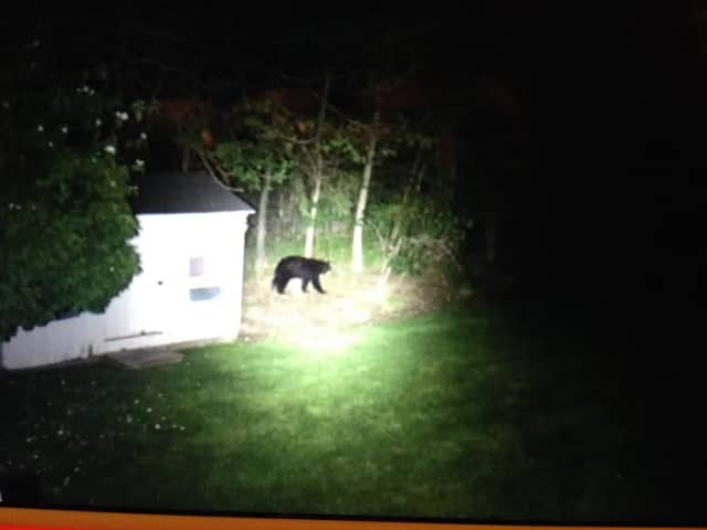The Birch Lane bear sighting was caught on camera by a homeowner on May 24.
