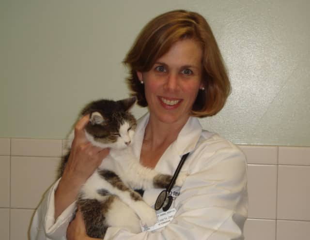 Elizabeth Zimels, a veterinarian at Broad River Animal Hospital in Norwalk.
