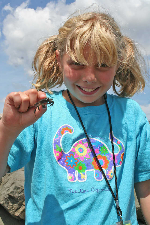 Heading to the beach to encounter crabs and other creatures is just one of the many activities for kids participating in The Maritime Aquarium at Norwalk's summer camp programs, which run the weeks of June 22-26 through Aug. 17-21.