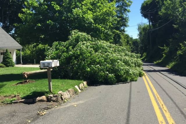 A downed tree blocks the road on Prospect Street in Ridgefield.