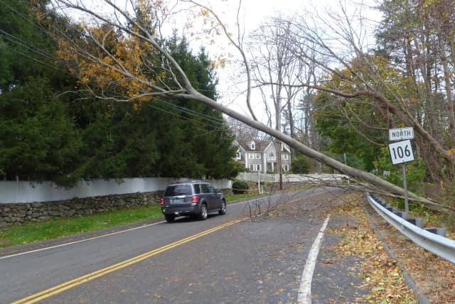 Dozens of trees fell in New Canaan thanks to Hurricane Sandy. Officials think it will take some time before the town's power is fully restored.