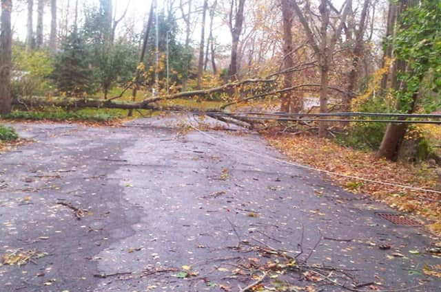 Hurricane Sandy toppled this tree in the vicinity of Belden Hill Road in Wilton.