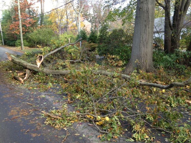 Downed trees are still prevalent in the area, forcing Eastchester schools to close for the week.