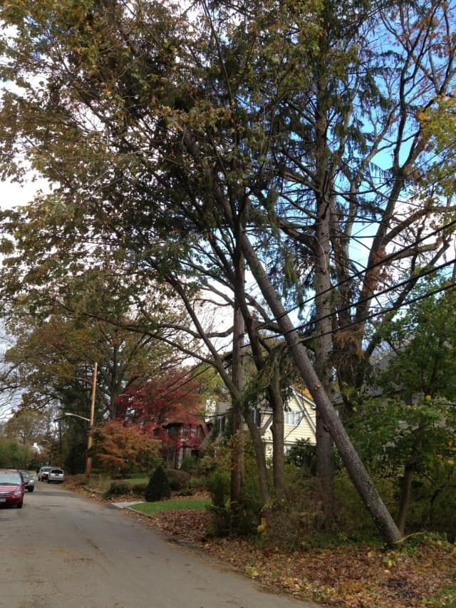 Downed trees and power lines have forced Scarsdale to cancel Halloween.
