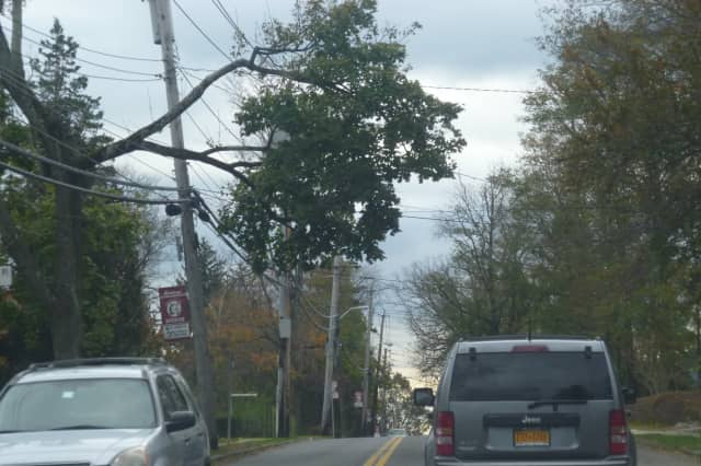Downed trees and branches hanging on wires can be seen throughout Harrison after Hurricane Sandy.