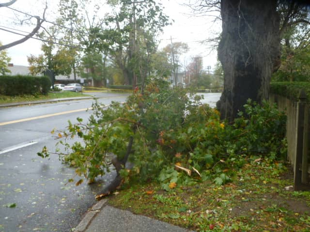 Fallen tree limbs, like this one on Broadway, must be cleared and wires must be repaired before power is restored in Hastings.