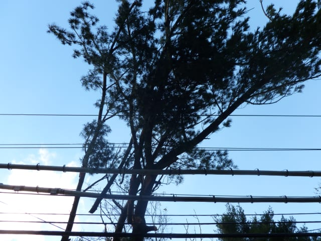 Eversource will be trimming trees throughout the area in effort to avoid power outages during storms.