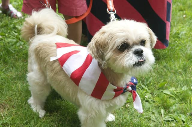Keep your pets happy and safe this Fourth of July weekend.