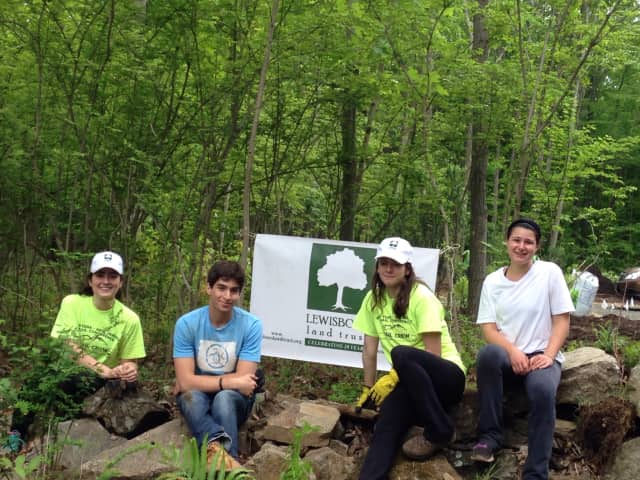 Interns at work for the Lewisboro Land Trust.