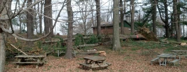 There are more than 100 downed trees throughout FDR Park in Yorktown.