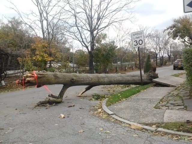 Mount Vernon will assess damage from Hurricane Sandy.