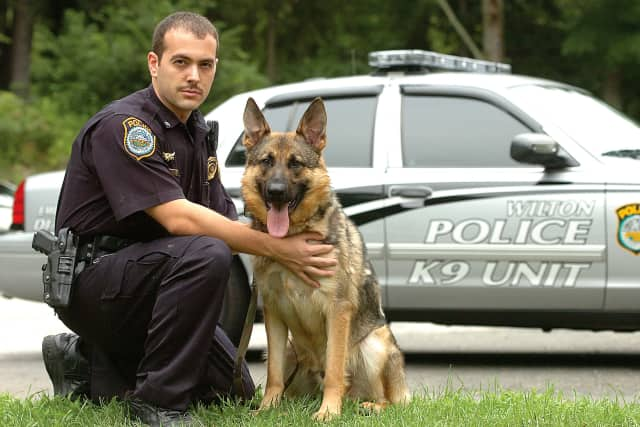 Wilton Police K-9 Enzo with his handler, Officer Steven Rangel.