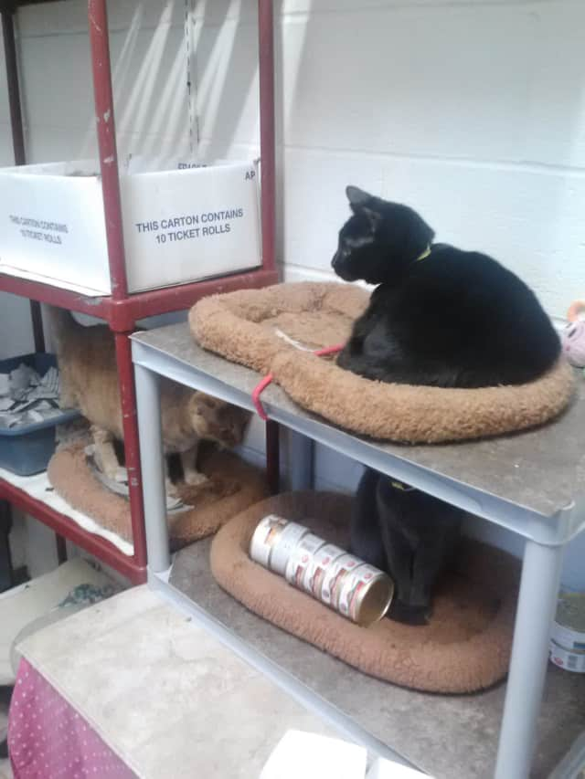 The Mount Vernon Animal Shelter takes in cats and dogs for adoption or fostering. It needs donations to support its operations.