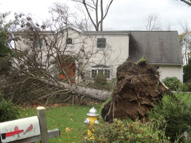 Thirty-five homes in Mount Pleasant were damaged by fallen trees, such as this one in Thornwood.