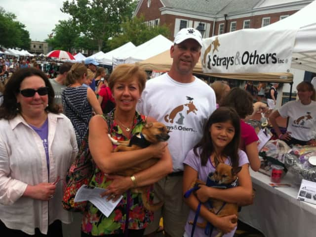 Strays & Others, Inc. in New Canaan is a volunteer-run, 501(c)3 nonprofit organization dedicated to the rescue and responsible placement of homeless and unwanted animals.
