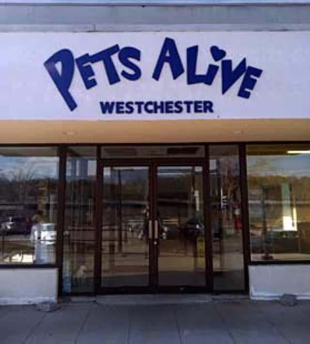 Pets Alive announced that its  location in Elmsford will close due to unsafe building conditions.