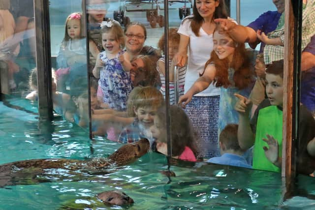Visitors to the Maritime Aquarium get up close with species from the Long Island Sound.
