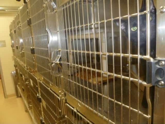 The cat kennel at the Greenwich Animal Control shelter.