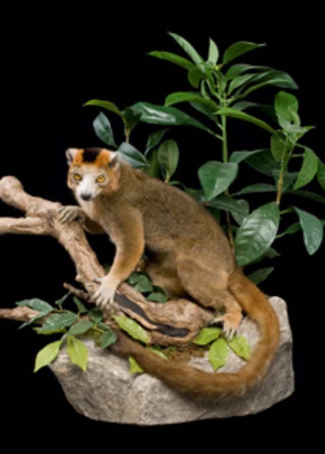 """Madagascar: Ghosts of the Past"" is on exhibition at the Bruce Museum through Nov. 8."