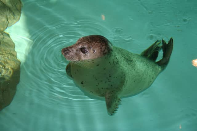 Norwalk residents can see harbor seals and the other creatures and exhibits for free Saturday at the Maritime Aquarium.